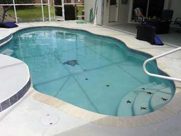 How about your pool surface? We can help you with a complete redesign and resurface!